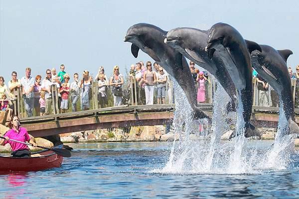 delfinarij-v-hardervejk