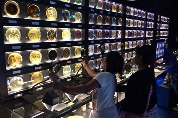muzej-mikrobov-virusov-i-bakterij