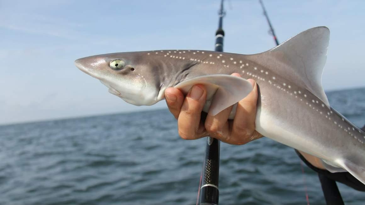 рыбалка в Нидерландах в Северном море