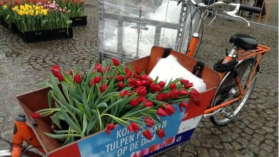 den-tulpanov-amsterdam