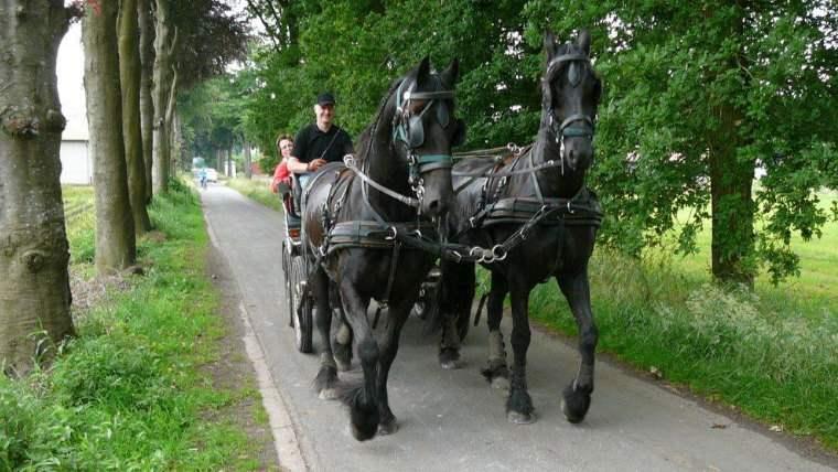 teambuilding-loshadi-belgium