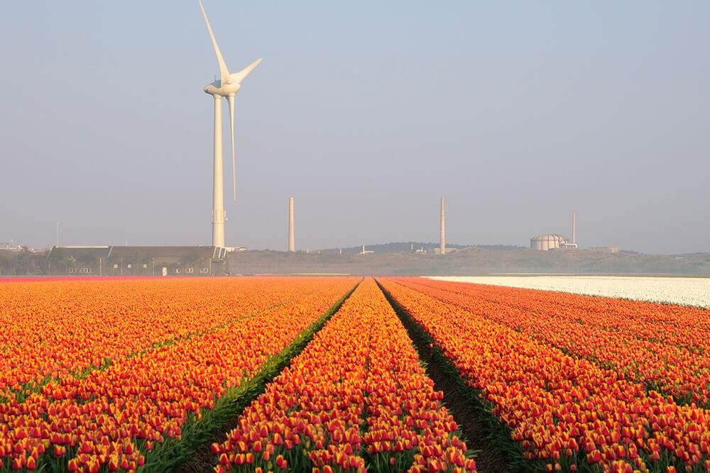 теплицы Нидерланды посещение