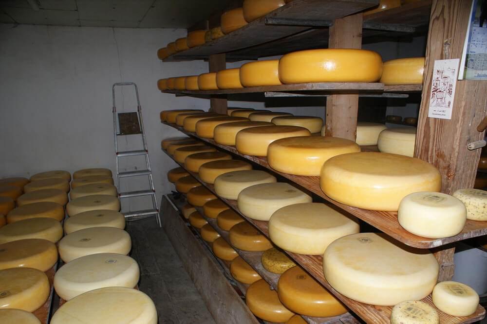 Сырные фермы Нидерланды посещение