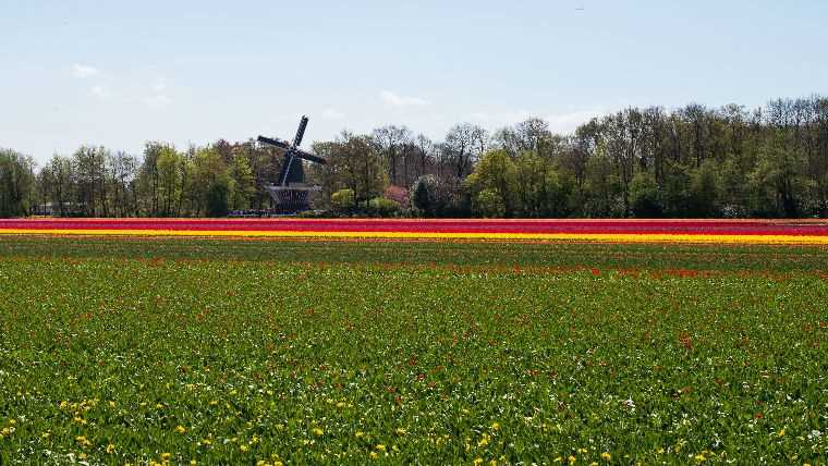 zhin-poezd-amsterdam-gaaga-lisse