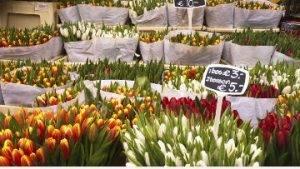Цветочный рынок Bloemenmarkt
