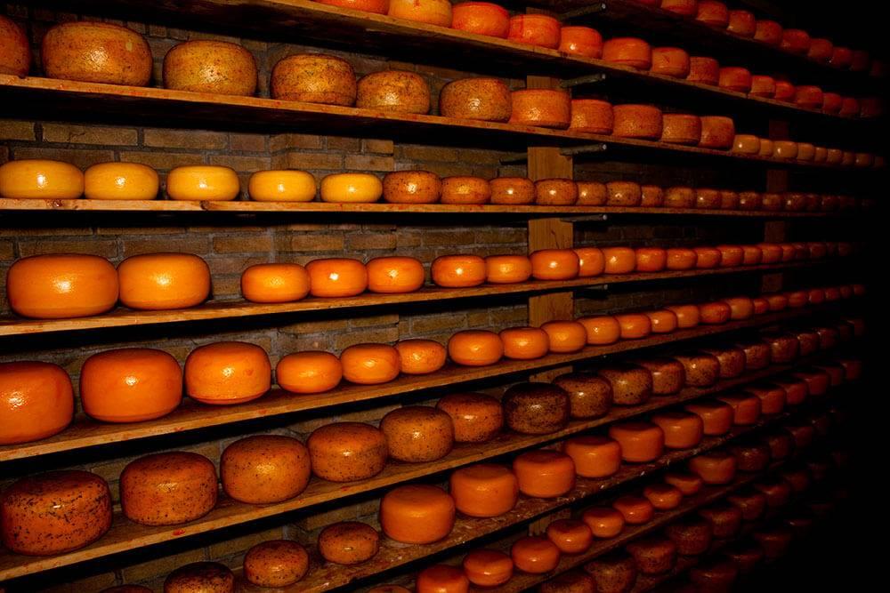 сыр голландия мастер-класс