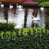 Королевский парк цветов Кёкенхоф: как организовать поездку в 2019 году