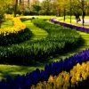 Королевский парк цветов Кёкенхоф