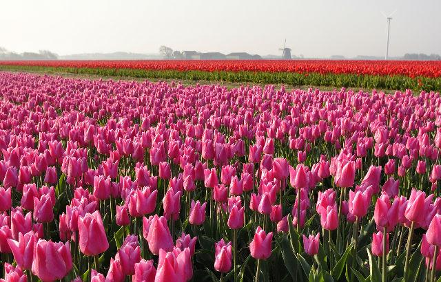 5D полет This is Holland Амстердам